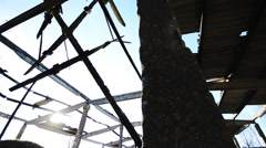 Abandoned building interior. Broken roof with green plants inside. Dolly camera. - stock footage
