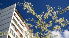 Cherry blossoms against a background of multi-storey  house Stock Footage