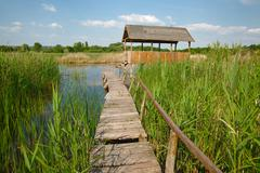 Swamp walking path - stock photo