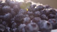 Closeup shot of freshly picked organic blueberries Stock Footage
