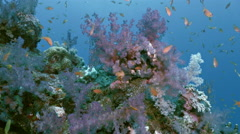 UHD underwater shot of soft coral pillar, Red Sea Stock Footage