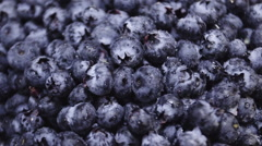 Macro closeup shot of a batch of fresh, ripe blueberries Stock Footage