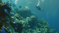 UHD underwater shot of scuba divers at coral reef, Red Sea - stock footage