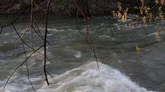 Rushing River at sunset with live and dead branches in view Stock Footage