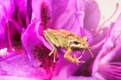 Little frog inside of wild flowers during bright daylight - stock photo