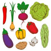 Fresh vegetables sketches for agriculture design Stock Illustration