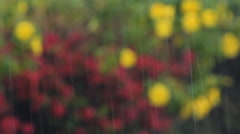 Rain falling. Defocused red and yellow flowers in background. Stock Footage