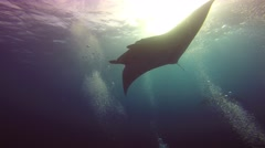 Great dive with large manta rays in Socorro island. Stock Footage