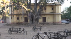 Jaipur, Rajasthan, India, December 2012 - old ficus tree in yard - stock footage