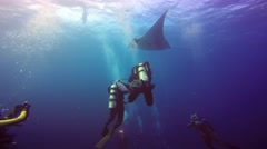 Great dive with large manta rays in Socorro island. - stock footage