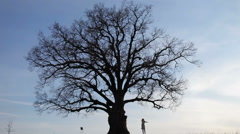 silhouette of a girl dancing in a large tree - stock footage