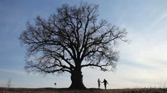 silhouette of a young couple kissing at the big tree - stock footage