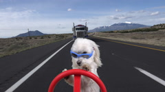 Cool Dog Drives Highway Races Truck Driver Stock Footage