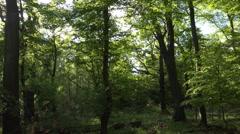 Wild rotten dense forest panning shot spring season Stock Footage