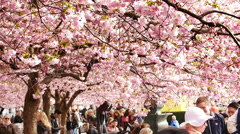 Kungstradgarden in Spring, Stockholm, Sweden Stock Footage