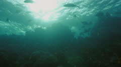 UHD underwater shot of coral reef top in evening mood Stock Footage