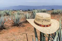 Sombrero on agave. Hat on a cactus. - stock photo