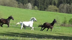 Horses run and gallop free on meadow Stock Footage