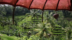 Rice fields, Padi Terrace, Ubud, Bali, Indonesia Stock Footage