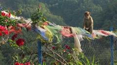 Monkey sitting on fence Stock Footage