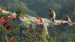 Two monkey sitting on fence Stock Footage
