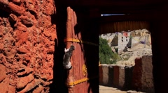 Cat trying to climb the door of a monastery, Mustang, Nepal Stock Footage