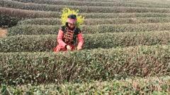 Ethnic minority girls picking tea on the hill, asian Stock Footage
