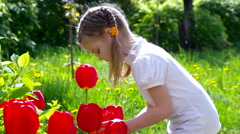 Girl considers red tulips Stock Footage