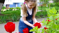 Girl considers photography red tulips with a slider Stock Footage