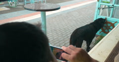 Man with cell phone taking picture of stray dog Stock Footage
