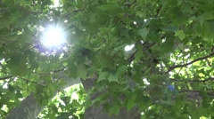 4K Foliage Forest Leaves, Sunshine, Sun Rays, Beam in Branches Wood, Summer View Stock Footage