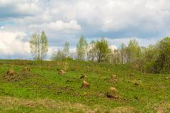 Natural landscape in early spring - stock photo