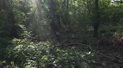 Wild rotten dense forest tilt shot blending sun rays lens reflection Stock Footage