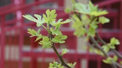 Blooming leaves on the branches of bushes - stock footage