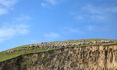 Flock of sheep at berg Stock Photos