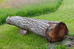 Cut and fallen walnut tree, can be used as bench Stock Photos