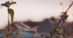 A Spiders Web with Water Drops during Sunset. Slow Motion 120 fps, 4K DCi. Stock Footage