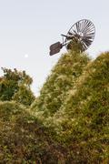 Old Windmill Eaten by Vegetation - stock photo