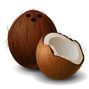 Coconut tropical nut fruit Stock Illustration