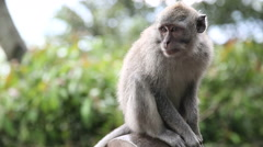 Monkey At Sacred Monkey Forest. Ubud, Bali, Indonesia Stock Footage