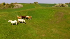 Flight over horses on green pasture - Aerial view Stock Footage