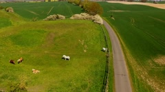Flight over horses on green pasture next to a country road  - Aerial view Stock Footage