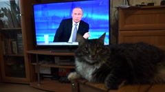 The cat looks at the Russian President Vladimir Putin on TV. 4K. Stock Footage