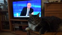 The cat looks at the Russian President Vladimir Putin on TV. 4K. - stock footage