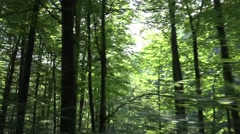 4K Pov Tracking Car Driving by Forest, Wood Road, Auto Window View in Nature Stock Footage