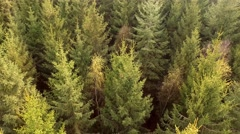 Aerial Drone fly Shot Over The North European Forest Stock Footage