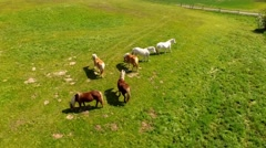 flight over horses on green pasture - Aerial view - stock footage