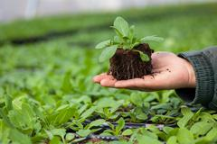 Human hands holding young plant with soil over blurred nature background - stock photo
