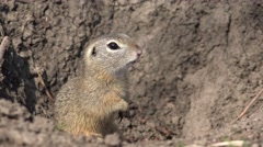 4K Weasel Hole in Field, Otter, Mink Home, Natural Environment, Marten Animals Stock Footage