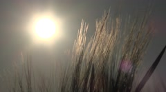 4K Wheat Ear Harvest in Sunset, Sun Ray in Cereals, Grains Field, Agriculture Stock Footage